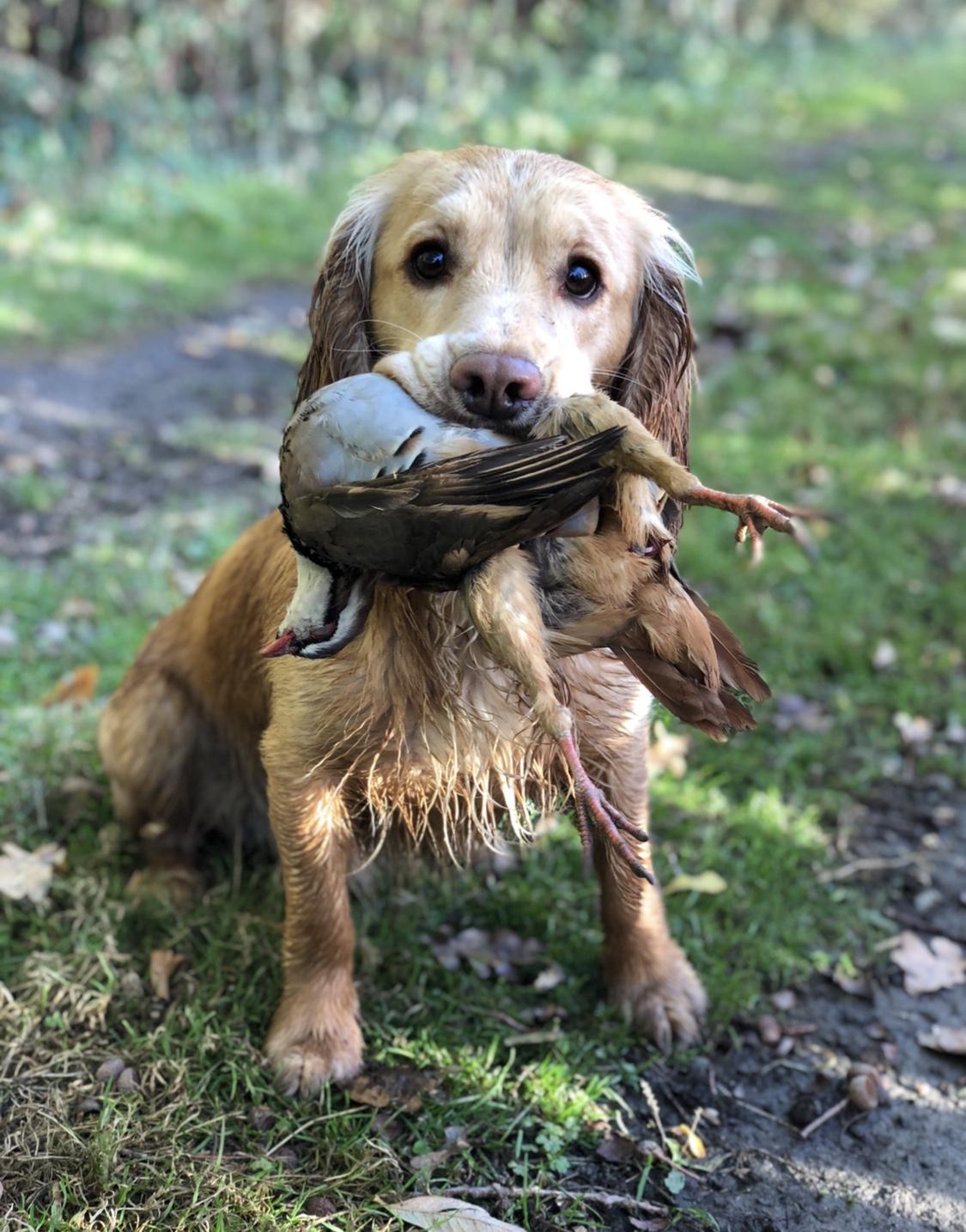 Frank Walker Dog Training